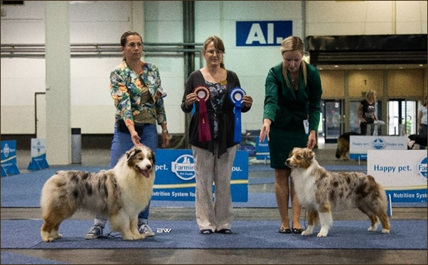 Dog Show in Budapest