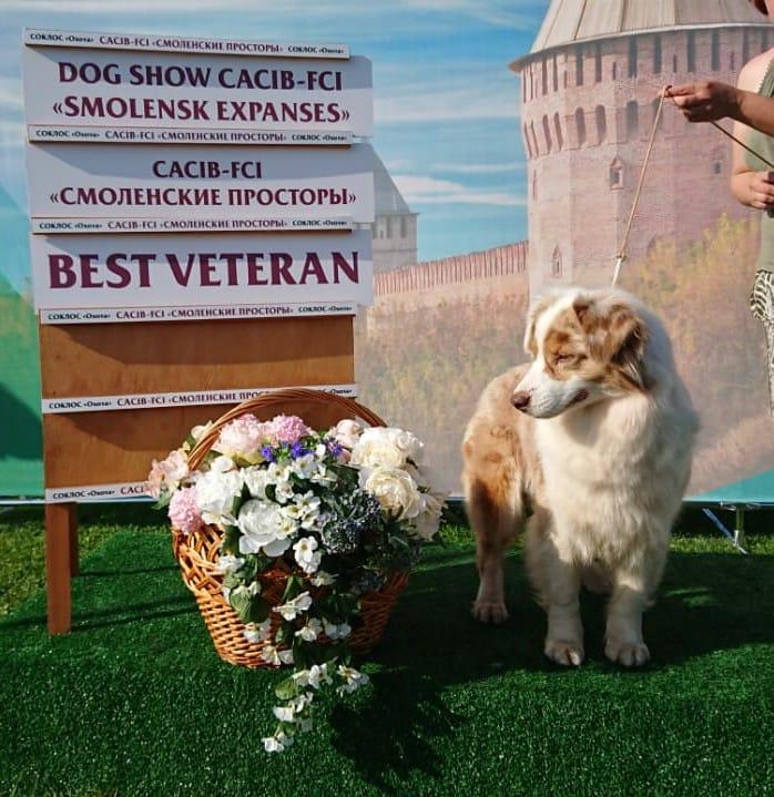 Best Veteran